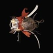 bowerbirds   the clearing   CD