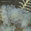 panabrite   sub-aquatic meditation   LP